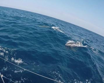 dolphin 1 (2)